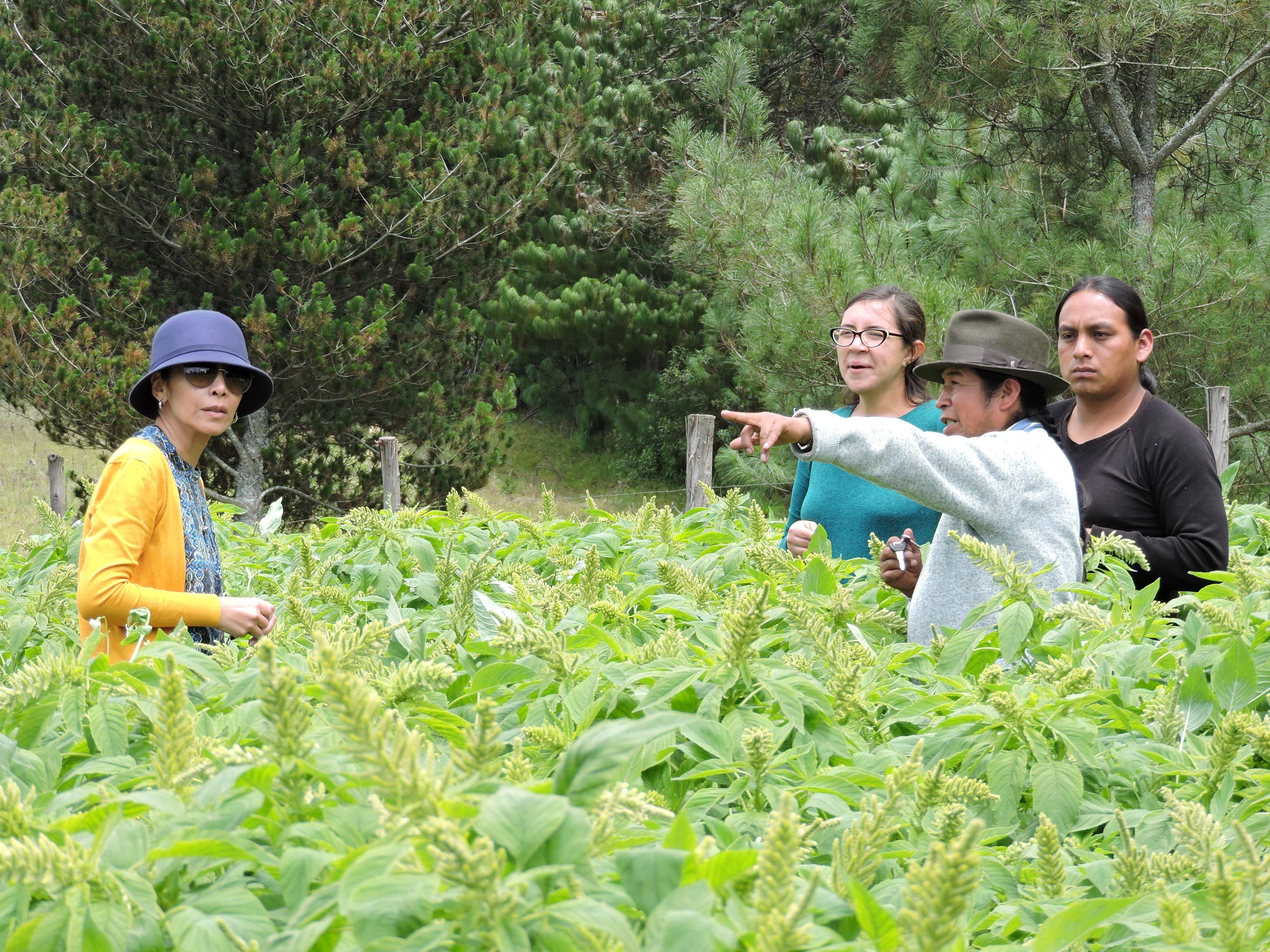 Entre campos de amaranto con la Asociación Mama Murukuna